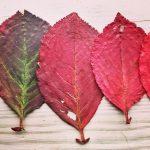 høstblader