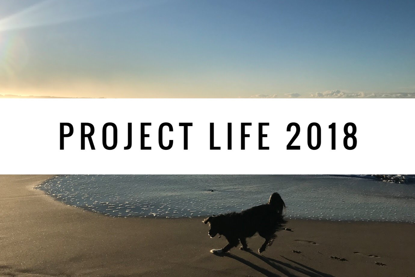 Project Life 2018