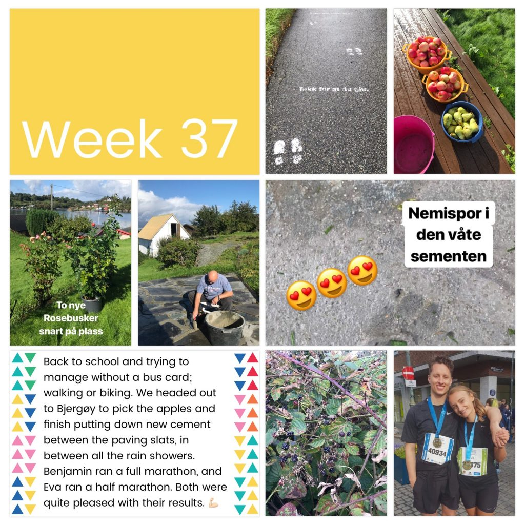 weekly photo collage week 37